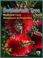 bottlebrush tree spiritual meaning