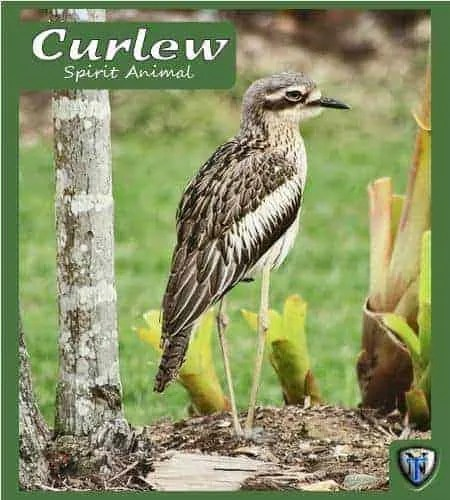 curlew spiritual meaning