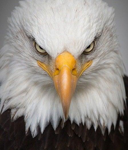 eagle spiritual meaning