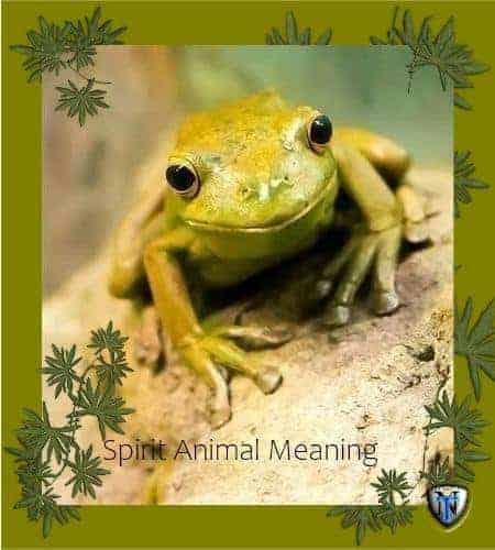 frog animal spirit meaning