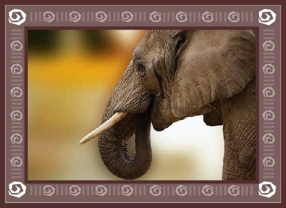 animal totem elephant