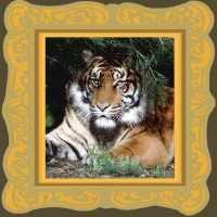 tiger animal spirit guide