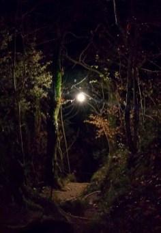 Tutta la magia del sentiero di notte