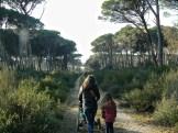 I sentieri di San Rossore