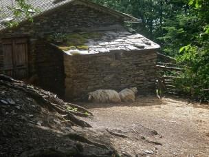 Casa Giorgini e le sue capre