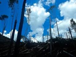 il bosco dopo il passaggio del vento terribile