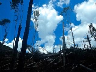 un canalone nel bosco dopo il passaggio della terribile tempesta dell'inverno 2015