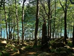 Si vede il lago tra gli alberi