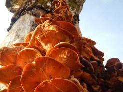 Condominio di funghi