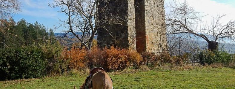 Fabio pascola nel cortile del castello