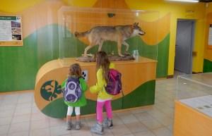 Il Centro Visita di Badia Prataglia, il lupo imbalsamato
