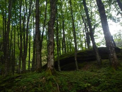 La foresta in primavera