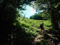 All'uscita dal bosco