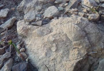 I fossili sono davvero ovunque