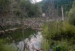 Il lago di Poggio Baldi