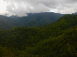 Le immense foreste del Parco delle Foreste Casentinesi, che circondano il lago di Poggio Baldi