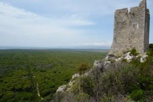 La pineta ducale vista dalla Torre di Castelmarino