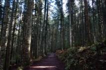 La foresta di douglasie di Vallombrosa