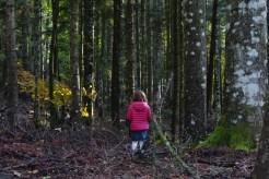 Nella foresta di Vallombrosa