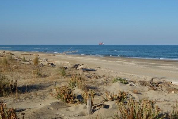 Dune, pinete e aree umide del Lido di Classe
