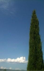cypres-vertical-187x300