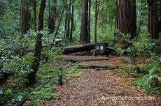 Butano_State_Park_023