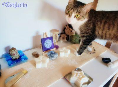 Autel chaton magic ©Sentulia
