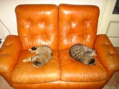 giornata nazionale del gatto, tess&udrotti