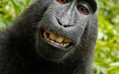 En daarom is lachen dus gezond. Pleidooi voor een lach!