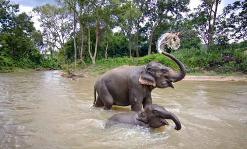 Why Kabini is a Must-Visit Destination for Nature Lovers | MakeMyTrip Blog