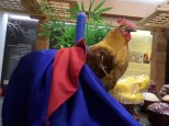 A fake rooster in a hanbok. I don't know why, and don't ask questions