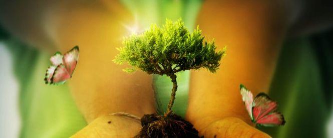Pengertian Lingkungan Hidup Manfaat Dan Cara Penanggulangannya