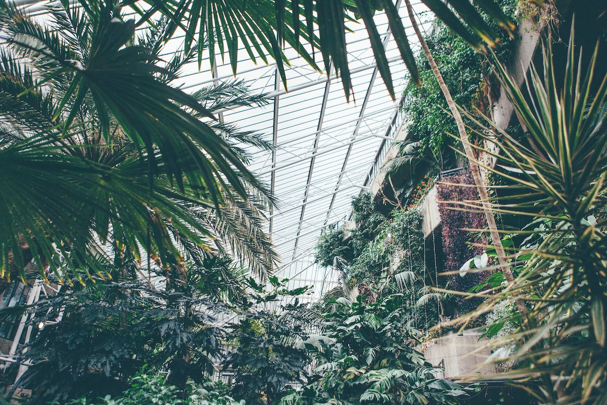 A + I: Barbican Conservatory wedding photography