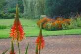 autumn-colours-sans-leaves.jpg