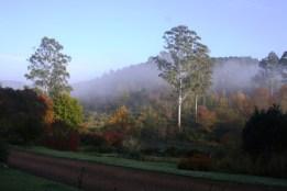 Morning-mist.jpg