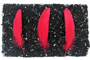 3 red feathers