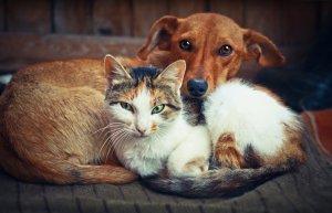 kucing-dan-anjing