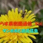 せらす果樹園通信 Vol.9 タンポポと訪花昆虫