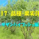 2017 品種・果実評価 サザンハイブッシュ編