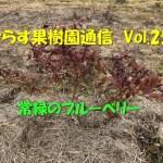 せらす果樹園通信 Vol.25 常緑のブルーベリー