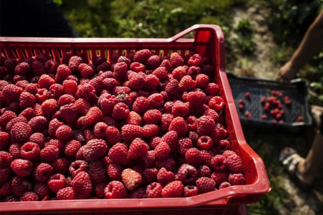 Serbian and Montenegrin producers meet global berry industry's movers and  shakers | United Nations in Serbia
