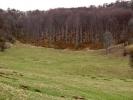Када уђемо у шуму, држимо се збијено; има више скретања, а траса НИЈЕ обележена
