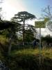 под којим је сеоско гробље