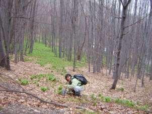Пут до Лисца под тепихом сремуша