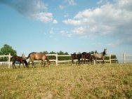 коњички клуб