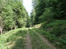 Сад одличним шумским путем...