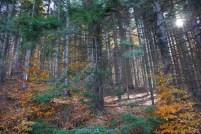 шуме Кучаја