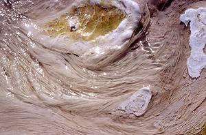 Filamentous bacteria of Mammoth Hot Springs in Yellowstone National Park