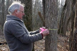 Parker measuring a tree.
