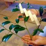 神道の不祝儀袋の書き方年祭